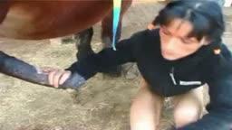 Cavalo gozando na boca de mulher no zoofilia