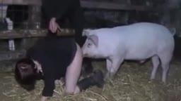 Mulher transa com porco video de zoofilia