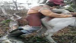 Matuto da roça comento uma égua caiu na net