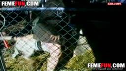 Cachorro estuprada sua dona no celeiro de cavalos
