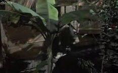 Sonia Braga em filme de Gabriela cravo e canela fodendo