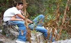 Rapidinha de mexicanos no mato