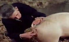 Homem comendo com uma porca em putaria zoofilia