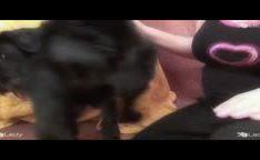 Dona de casa tomando no cuzinho por seu cachorro na zoofilia